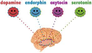 hersenhormonen