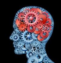 hersenen en leiderschap